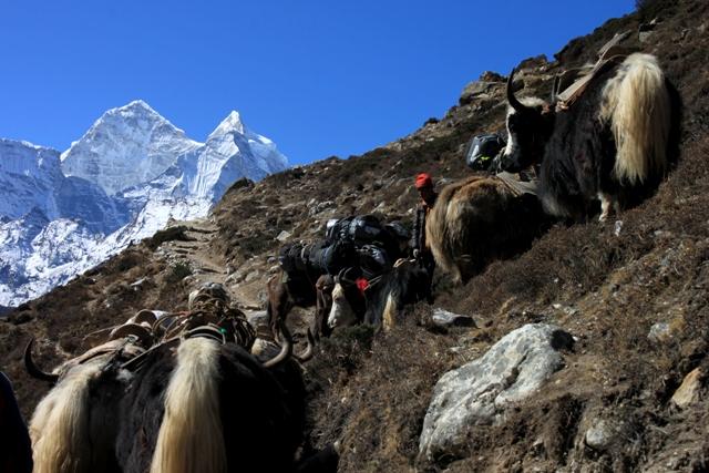 """Himalayan """"trafic jam"""""""