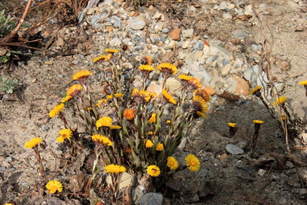Våren har nått Nepal!