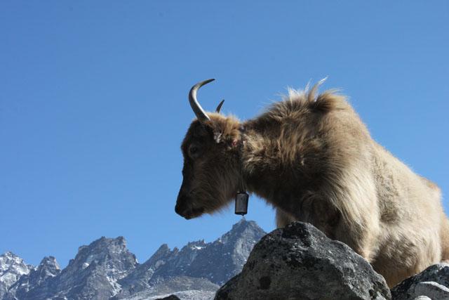 Himalayas furste