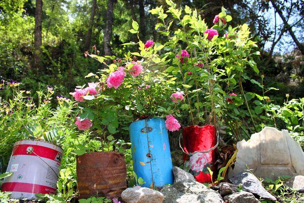 Blommor överallt - Sommar i Himalaya!